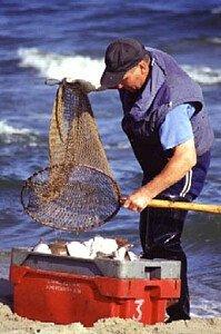 świeże ryby prosto z morza